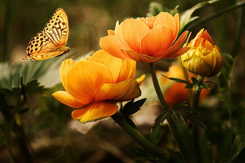 garden, flowers, butterfly