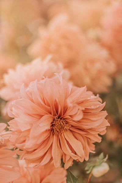 flowers, petals, flora